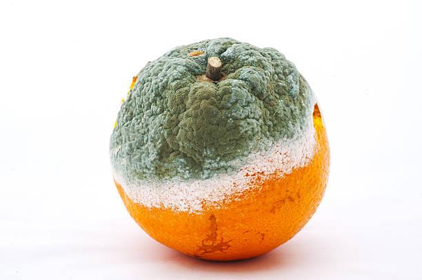 moldy orange moldy orange rotting stock pictures, royalty-free photos & images