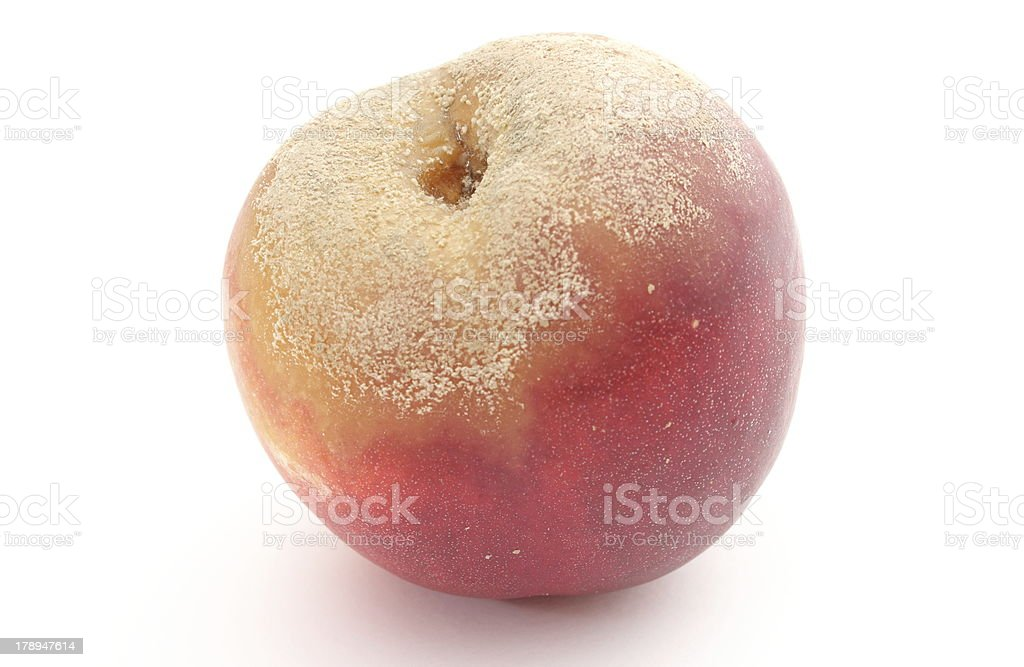 Moldy peach on white background royalty-free stock photo