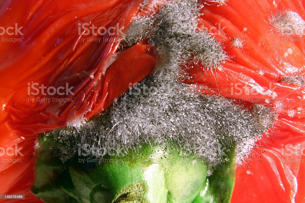 moldy pepper royalty-free stock photo