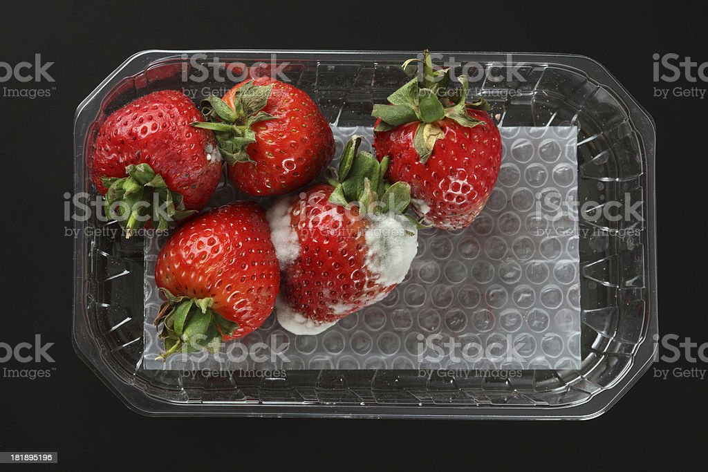 Moldy strawberries stock photo