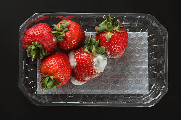 Moldy strawberries Moldy strawberries in a plastic package. Black background. rotting stock pictures, royalty-free photos & images