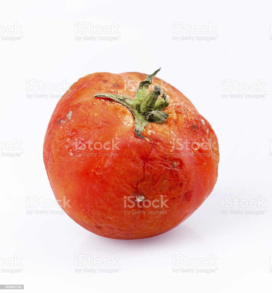 moldy tomato stock photo
