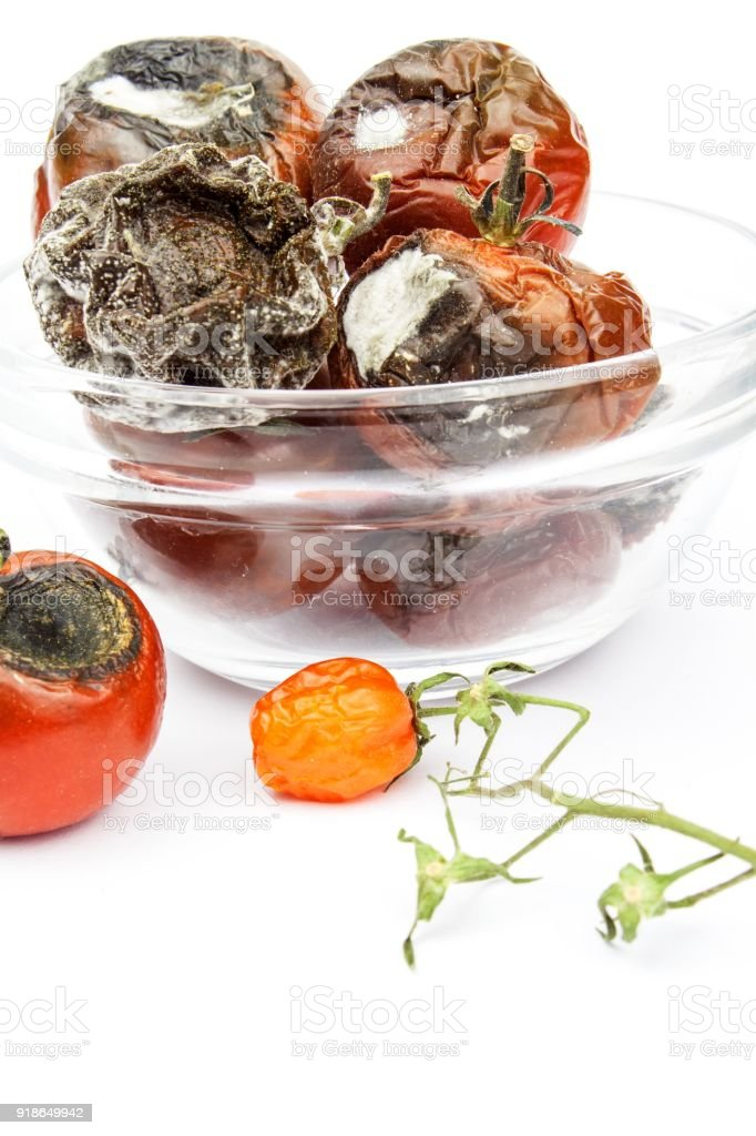 Moldy tomatoes in a glass bowl on a white background. Unhealthy food. Bad storage of vegetables. Mold on food. stock photo