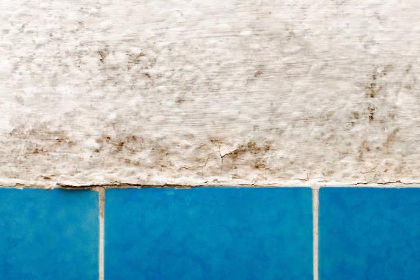 Schimmel Wand im Badezimmer mit blauer KachelNahaufnahme – Foto