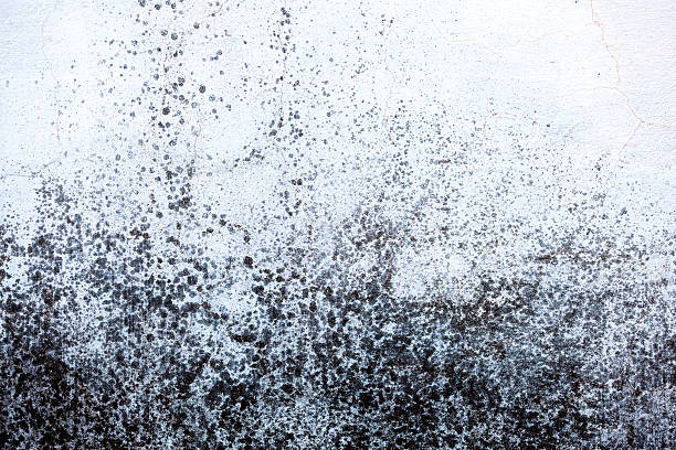 Moldy wall Mold stains on exterior wall. fungal mold stock pictures, royalty-free photos & images