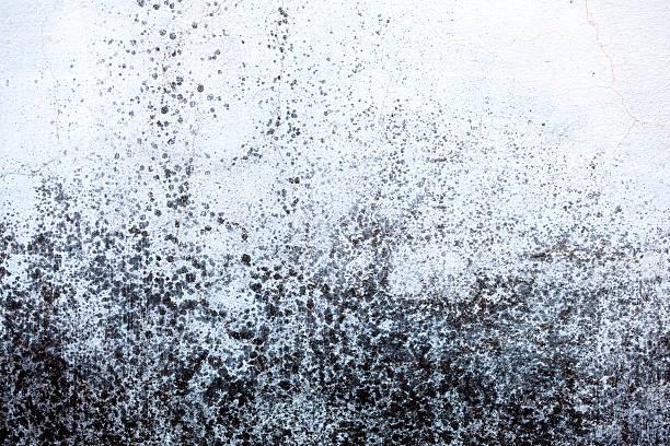 moldy wall - meeldauw stockfoto's en -beelden