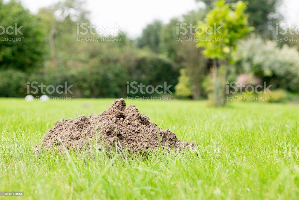 Mole Hill in a domestic garden stock photo