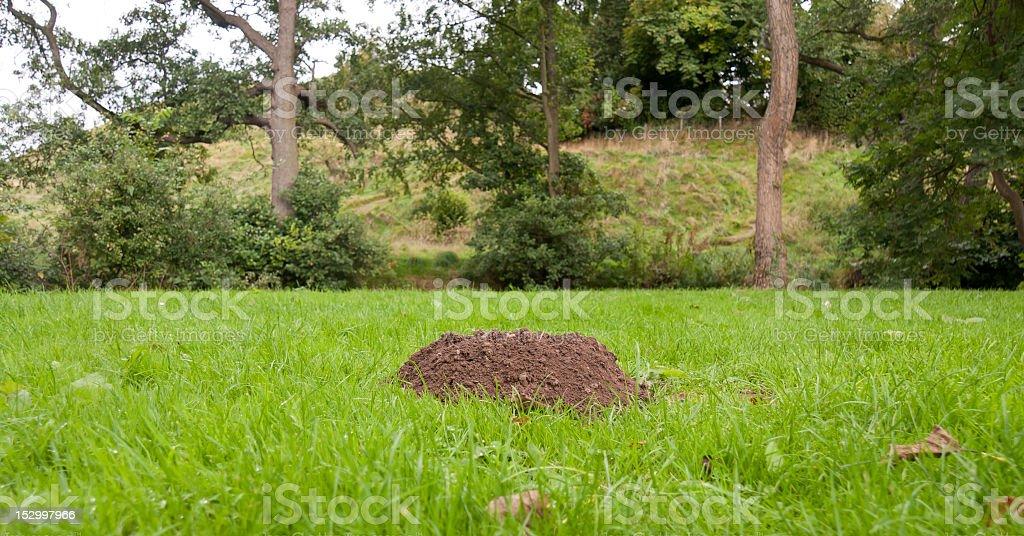 Mole hill on grassy lawn stock photo
