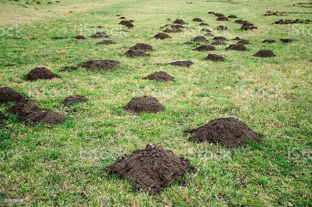 Mole holes stock photo
