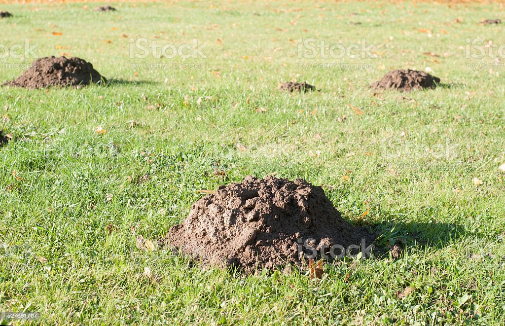Mole mounds in the sport stadium stock photo