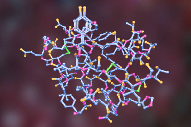 Molecular model of insulin hormone Molecular model of insulin hormone, 3D illustration. It is produced by pancreas and takes part in glucose and lipid metabolism peptide stock pictures, royalty-free photos & images