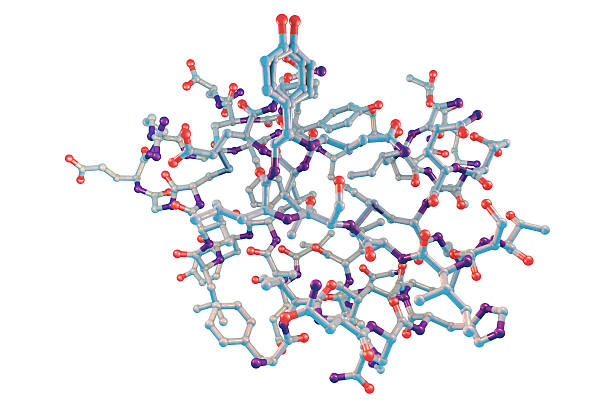 molecular model of insulin molecule - hypoglykämie stock-fotos und bilder