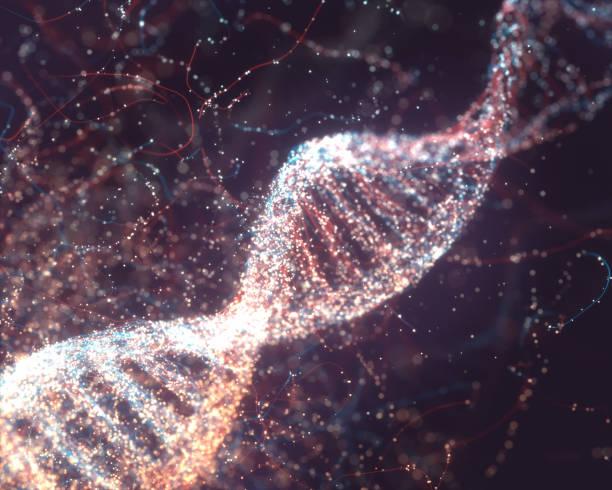 dna molecular structure - rna foto e immagini stock