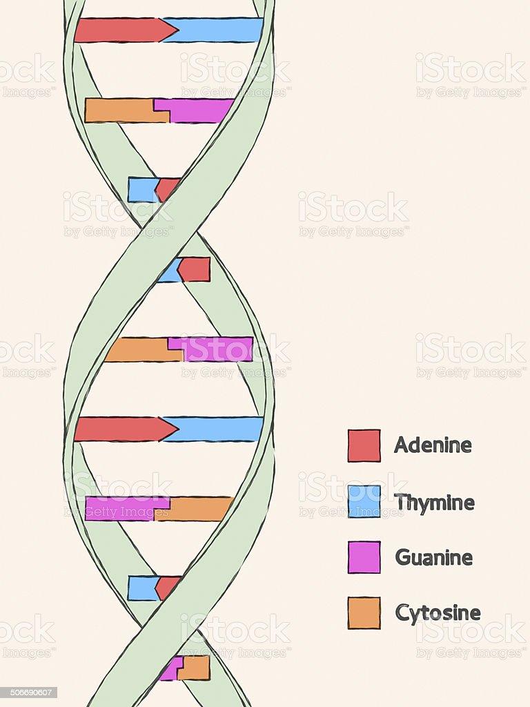 DNA Molecular Structure XL+ stock photo
