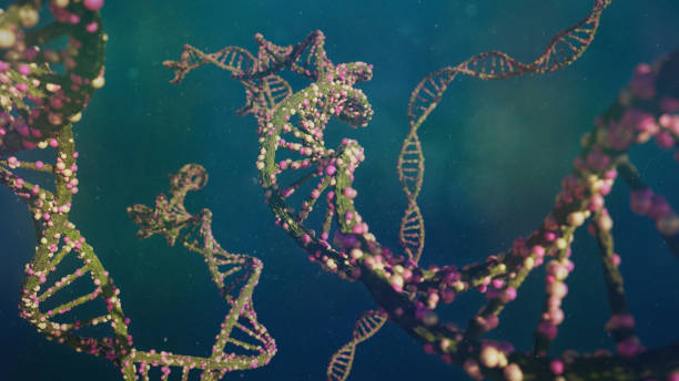dna molecule, double helix carrying genetic instructions - rna foto e immagini stock