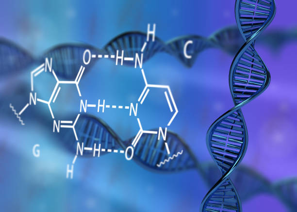 DNA molecule double helix GC base pair DNA molecule double helix GC base pair 3D rendering illustration carbohydrate biological molecule stock pictures, royalty-free photos & images