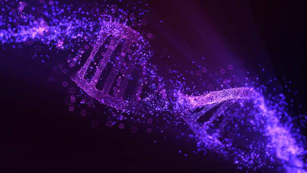 modelo de molécula de adn. partículas brillantes - adn fotografías e imágenes de stock