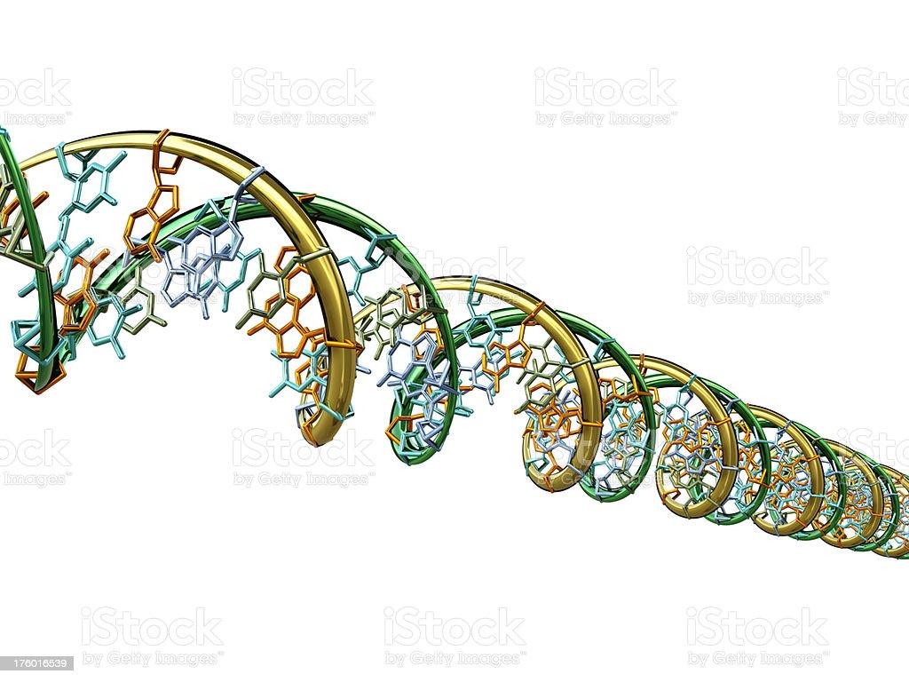 DNA Molecule Model royalty-free stock photo