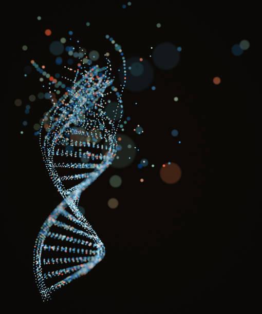 dna molecule structure - rna foto e immagini stock