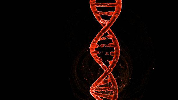 dna-molekülestruktur, strang, reparatur, bearbeitung und manipulation. orangefarbene beleuchtung, basispaare entfernte 3d-illustration - spleißen stock-fotos und bilder