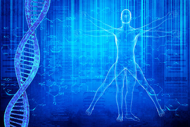 DNA molecules and virtuvian man Vitruvian Man image on a blue background with DNA physiology stock pictures, royalty-free photos & images