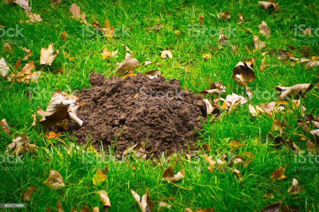 Molehill in a deep green pasture stock photo