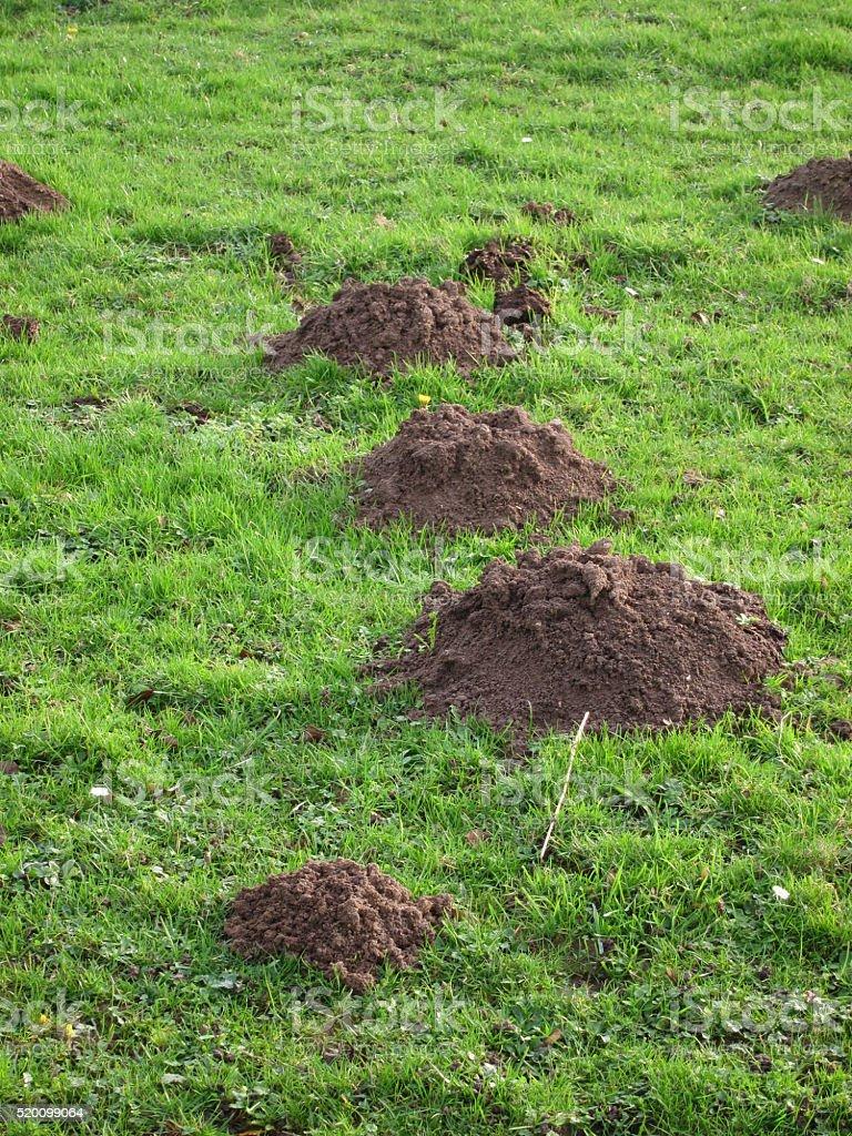 molehill in a field stock photo