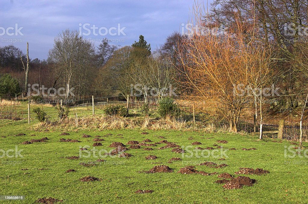 Molehills in Field royalty-free stock photo