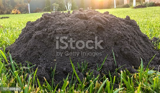 istock molehills on lawn made by moles population view on sunny day. 1071698452