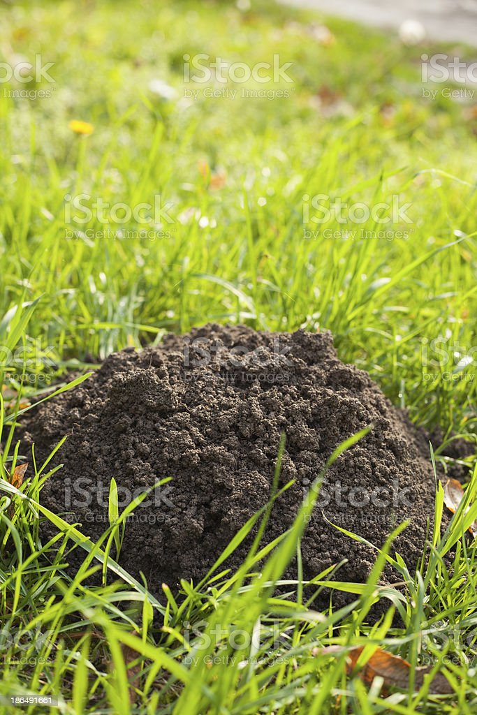 Mole's hole stock photo