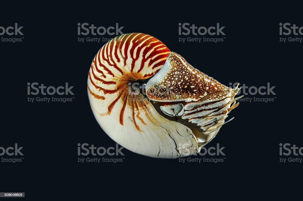 Mollusk stock photo