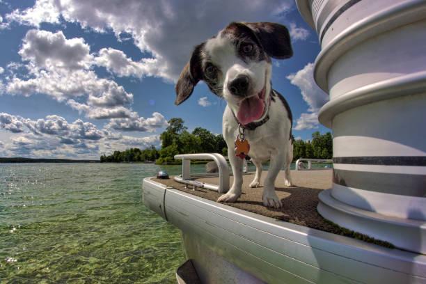 Promenade en bateau de Molly - Photo