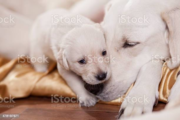 Mom And Child Stock Photo - Download Image Now