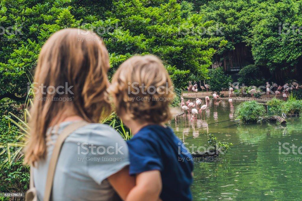 Mamá e hijo buscan la bandada de pájaros de flamencos en una laguna en el parque de Hong Kong - foto de stock