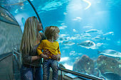 Mom and son are looking at big fish in the aquarium and having fun.