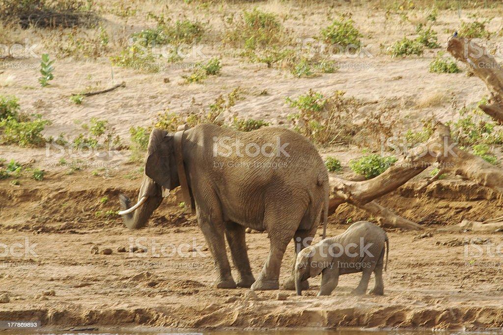 Mom Baby Elephant Stock Photo Download Image Now Istock