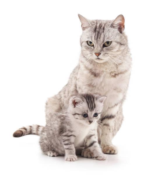 Mom cat and kitten picture id898761778?b=1&k=6&m=898761778&s=612x612&w=0&h=c6onvnojk0w pn59 22k1xlf2cx7ftwcbawdtxlxara=