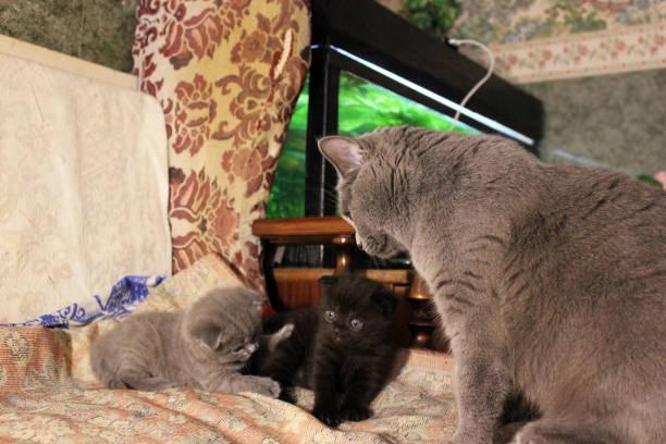 Mom cat and kittens picture id1169315104?b=1&k=6&m=1169315104&s=612x612&w=0&h=ysr mphsxxwo7vtbeqo vnov3lpwiqv5jxll9w9l0e0=