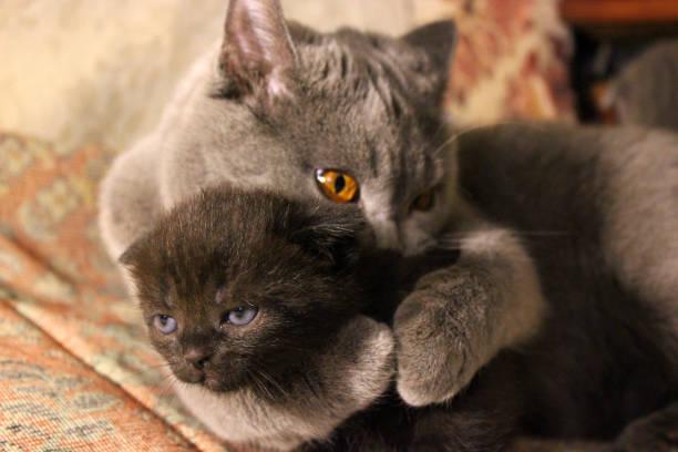 Mom cat and kittens picture id1169315537?b=1&k=6&m=1169315537&s=612x612&w=0&h=z5vk7 gcddcdgpnehvwkafutsiapicehyejkhgvjunk=