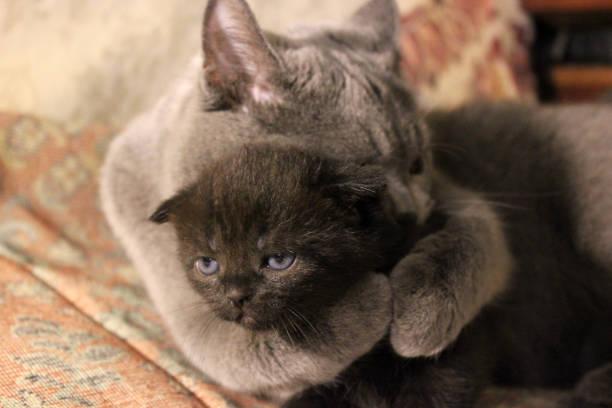 Mom cat and kittens picture id1169315563?b=1&k=6&m=1169315563&s=612x612&w=0&h=7dojapsiwjjiboogtpbd yjopjobp6jbovyyg4vwzyi=