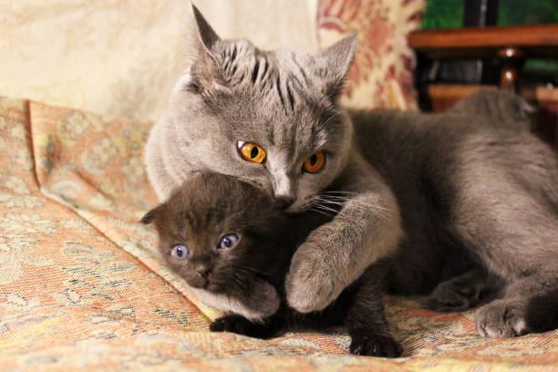 Mom cat and kittens picture id1169316149?b=1&k=6&m=1169316149&s=612x612&w=0&h=se7nusxbjb8ozfqxfggm7lxolyu9trb 5owgijwlunq=