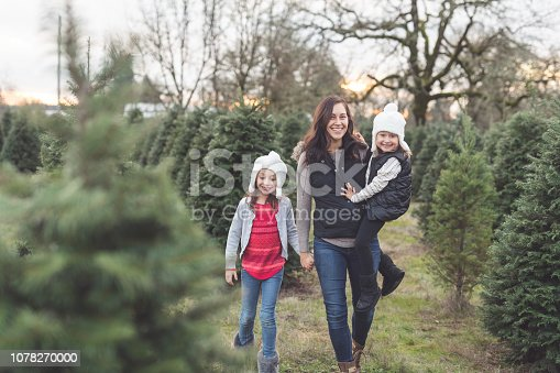 A beautiful young mom holds one daughter's hand and carries the other as they walk through a Christmas tree farm looking for just the perfect one!