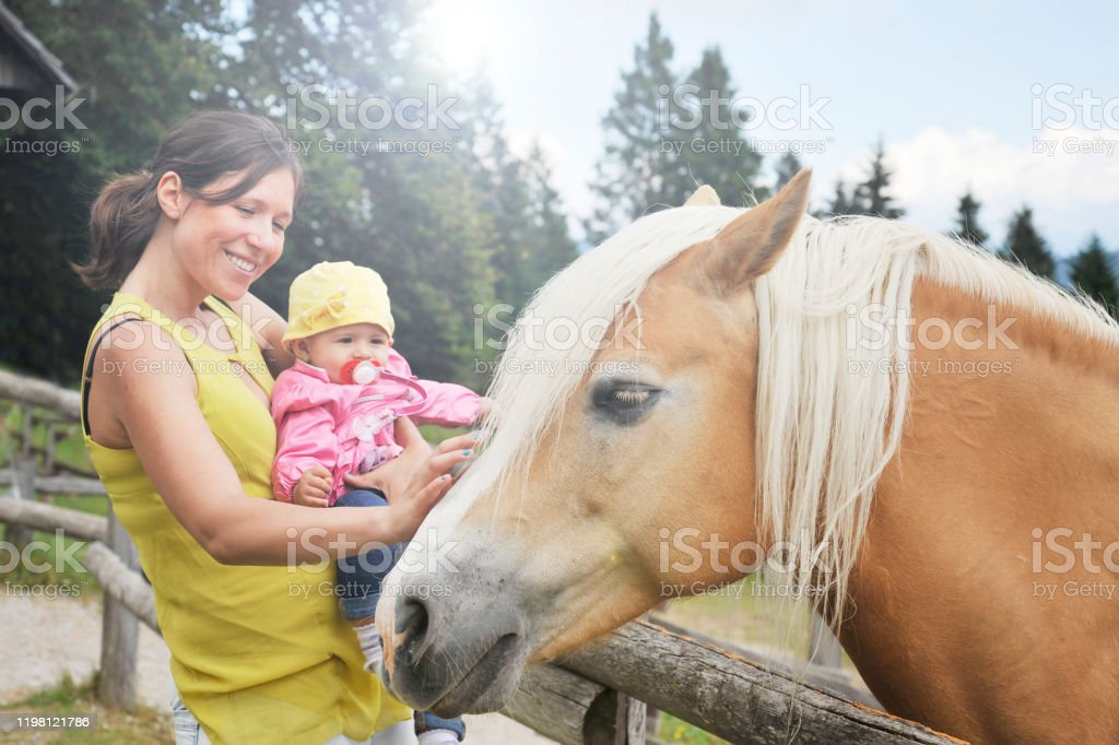 Mom With Her Daughter Are Meeting A Horse In The Educational Farm Happy Childhood Concept Pet Therapy Concept In Countryside Stock Photo Download Image Now Istock