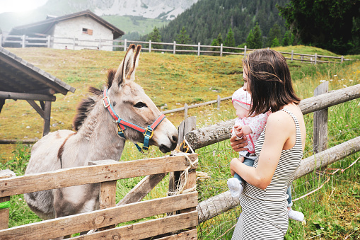 Mom with her daughter having fun at farm ranch and meeting a donkey - Pet therapy concept in countryside with donkey in the educational farm - Pet therapy concept with children