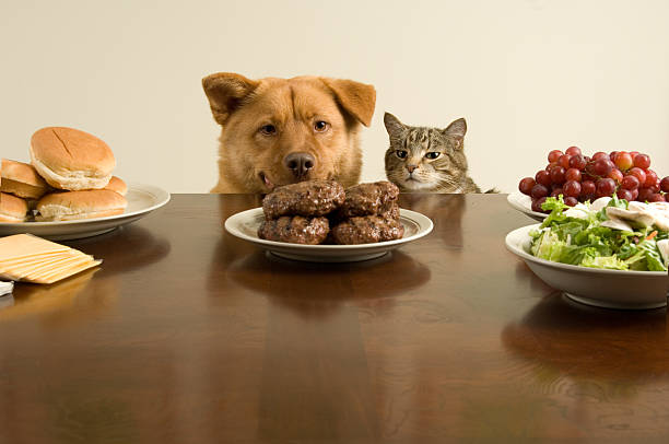 Moment before the feast