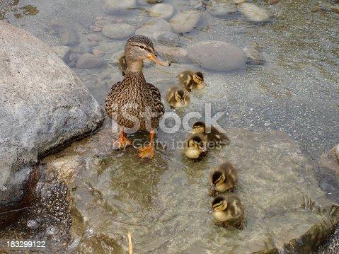 istock Momma Was Wet 183299122