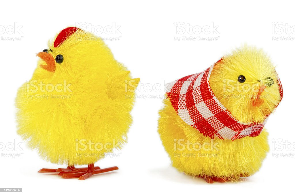 mommy and daddy chick dispute royalty-free stock photo