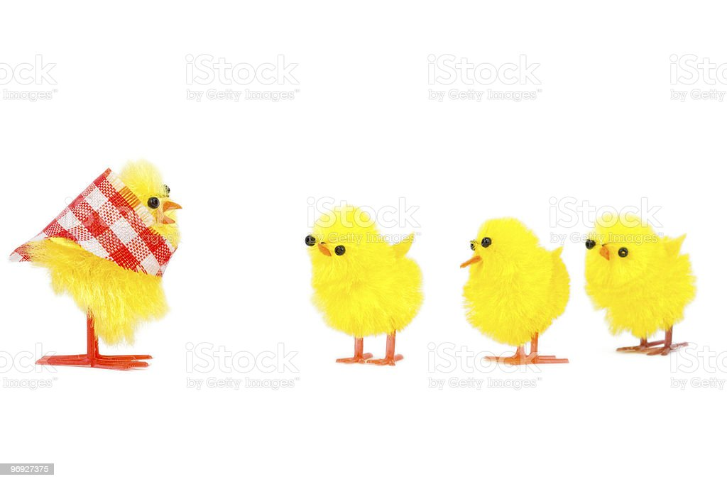 mommy chick and three babies listening royalty-free stock photo