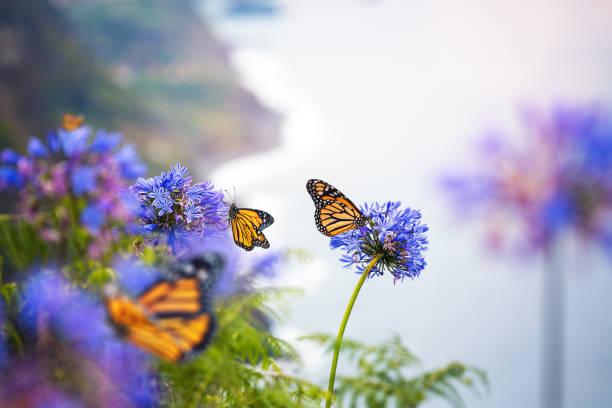 Monarch butterflies picture id1206854771?b=1&k=6&m=1206854771&s=612x612&w=0&h= mwdrjchjxk3eaydvl yfejj0duq8tq3mk 6 ema 7g=