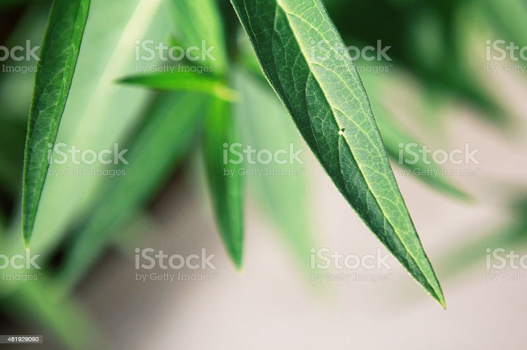 Monarch Butterfly Egg on a Leaf stock photo